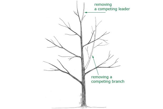 Maintaining a central leader