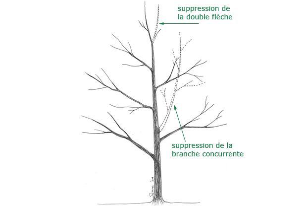 Supression de la double flèche et de la branche concurrente