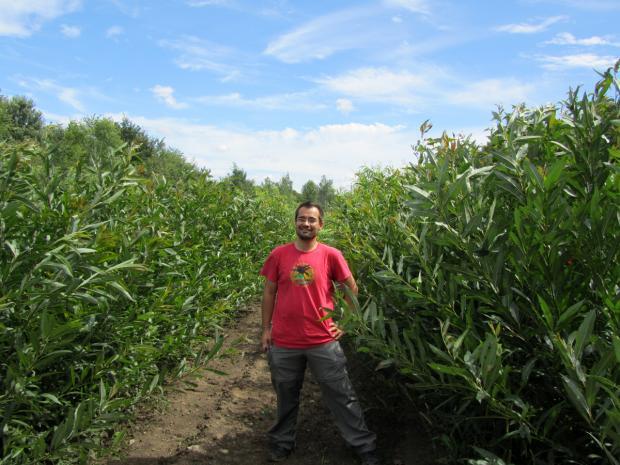 Plantation saule : Frédéric Pitre entouré d'une plantation de saules.