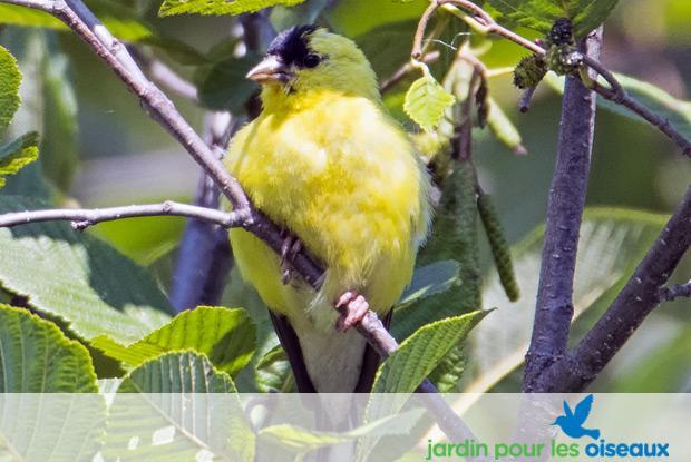 Jardin pour les oiseaux avec logo