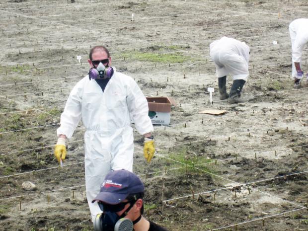 Mise en place d'une expérience de décontamination de sols contenant des HAP et d'autres hydrocarbures au printemps 2011.