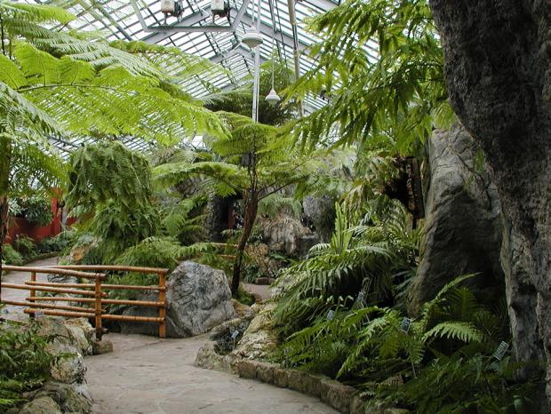 Pont en bambou de la Serre des fougères