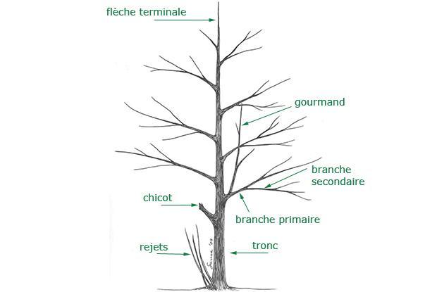 Structure de l'arbre