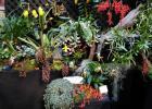 Orchidexpo 2017 : le Jardin botanique se distingue