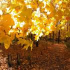 Jardin des Premières-Nations en automne.