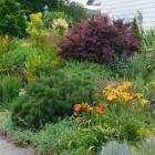 Folleflore - Jardin pour la biodiversité - Programme Mon jardin Espace pour la vie