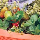 Jardin nourricier