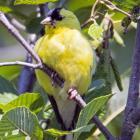 Jardin pour les oiseaux