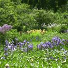 Jardiner sans pesticides