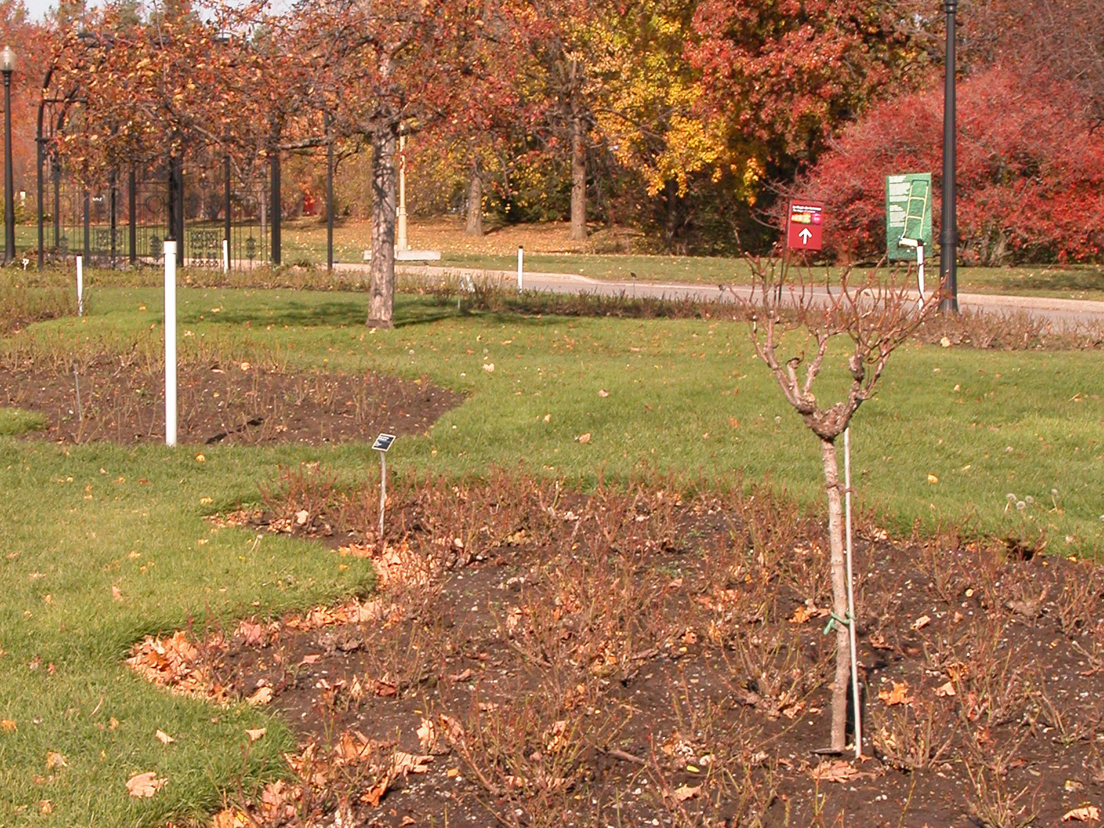 Mulching Staking Pruning And Fertilizing Space For Life